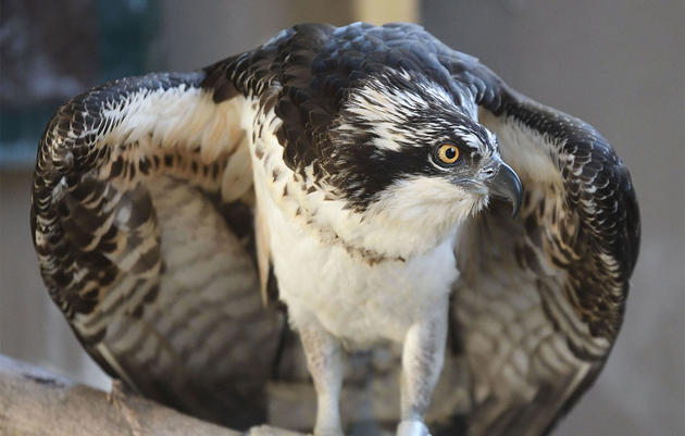 Raptor Rapture