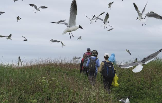 Coastal Maine Bird Studies for Teens