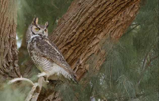 Owls: Soul of the Night