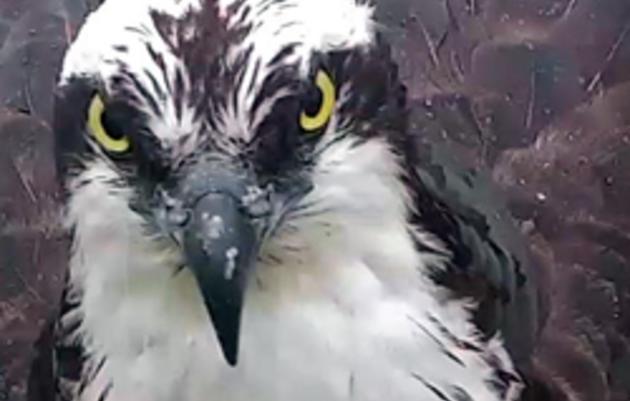 Audubon Live Cams