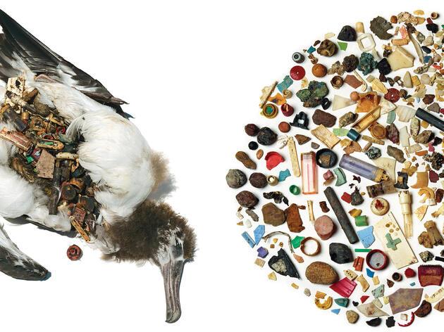 Threats to Seabirds