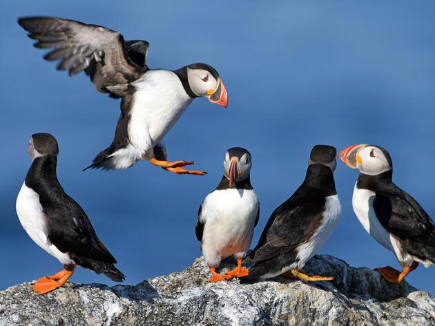 Seabird Biology