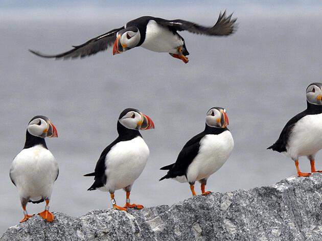 Field Ornithology