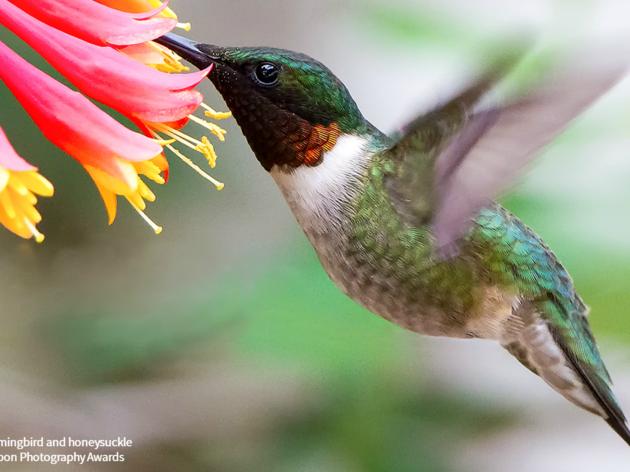 Creating Bird-Friendly Habitats